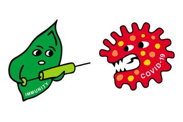 Олія для імунітету: амарант чи чорний кмин?